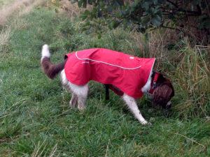 Ruffwear Aira rain jacket