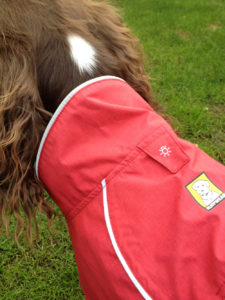 Ruby the Springer Spaniel in Ruffwear Aira jacket collar